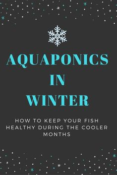 Winter is setting in quickly for us in the southern hemisphere, and we have a helpful article on how to keep your fish healthy during the cooler months.