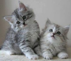 How adorable #cute #kittens #animals