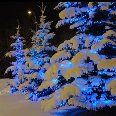 "Blue lights on snow covered trees gives the illusion of ""Blue Ice"""