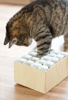 Katzenspielzeug Fummelkiste DIY A super easy DIY for a litter box as a cat toy toy made of baby rolls. Diy Cat Toys, Homemade Cat Toys, Cat Toilet, Gatos Cats, Cat Accessories, Cat Scratching, Cat Health, Cat Furniture, Cat Love