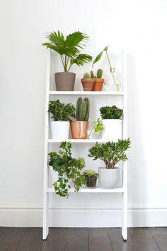 Plant shelf ladders