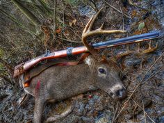 Deer with Hawken Rifle