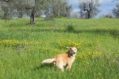 Our dog Eros