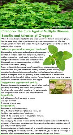 """Benefits of oregano plant are partially due to content or rich in antioxidants. Incidentally, in the journal of clinical nutrition """"is mentioned as was found in oregano antioxidant content of 42 times larger than apple. Aromatic Herbs, Healing Herbs, Natural Healing, Holistic Healing, Oregano Plant, Oregano Oil, Lemon Benefits, Coconut Health Benefits, Oregano Tea Benefits"""