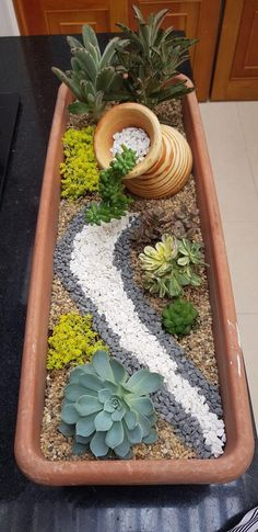 Garden Yard Ideas, Lush Garden, Garden Projects, Garden Pots, Garden Bed, Succulent Gardening, Succulent Plants, Planting Succulents, Cactus Plants