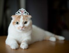 Princess for a day...{Pokke}