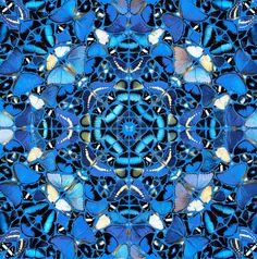 An intricate fractal of gorgeous blue butterflies. by Damien Hirst.