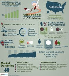 Umbilical cord blood stem cells are potential stem cells that can convert into any type of -determined cells. http://www.alliedmarketresearch.com/stem-cell-umbilical-cord-blood-UCB-market