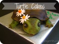 Turtle Cakes - Cakes By Erin