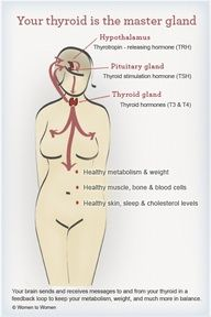 Great info on the bascis of your Thyroid.  Our thyroid effects numerous systems and functions including metabolizing food, energy levels, brain development, cell function, sleep and much more. Its important to support your thyroid at every point in your life!