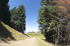 Family Road Trip: Marys Peak | Travel Oregon