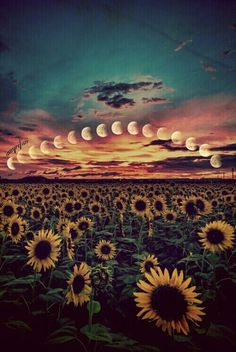 """Search Results for """"sunflower boho wallpaper"""" – Adorable Wallpapers Tumblr Wallpaper, Cute Wallpaper Backgrounds, Aesthetic Iphone Wallpaper, Nature Wallpaper, Phone Backgrounds, Cute Wallpapers, Aesthetic Wallpapers, Hippie Wallpaper, Sunflowers Background"""
