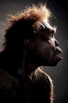 Homo Erectus Georgicus A subspecies of Homo Erectus, only found in Dmanisi, Georgia. - Hominid Reconstructions Are A Blast From The Past (16 pics) - Orrazz