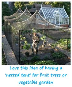 urban gardening - Fruit cage Protects against some kinds of pests that might steal the fruit Garden Trees Potager garden, Garden, Garden trees Potager Garden, Veg Garden, Vegetable Garden Design, Greenhouse Gardening, Garden Cottage, Fruit Garden, Garden Trees, Greenhouse Ideas, Simple Greenhouse
