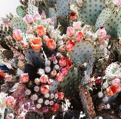 I want to be a cacti. Strong enough to live in desert land pinterest  emilybytheocean ✿