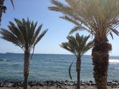 Twitter / parquesantiago3: Beautiful day in #tenerife