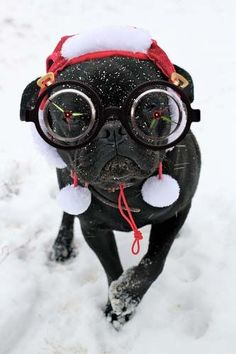 Most awkward ski goggles for dogs