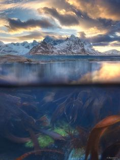 Parallel worlds - In search of original angels on Lofoten islands. There are parallel worlds can be found in Northern Norway. Finally, the aquabox was used. Norway, Lofoten islands, Varied. andrewbazanov.com