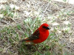 Ile de la Reunion: le cardinal
