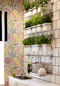 Wall of rails containing pots of fresh herbs and dish drying rack