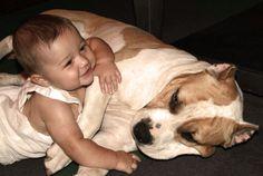 Pit Bull com bebê