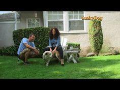 Lucky Dog - Simone Enjoys Popcorn