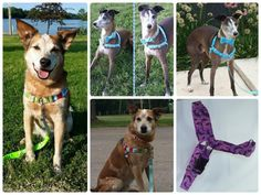 No Pull Harness - Choose Your Fabric - Design Your Own Front Attach Harness Little My, Collar And Leash, Dog Harness, Metal Buckles, Dog Design, Design Your Own, Color Patterns, Fabric Design, Printing On Fabric
