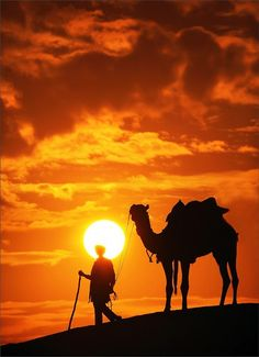 Camel and Thar desert sunset, Jaisalmer, India Desert Life, Desert Sunset, Beautiful Sunset, Beautiful World, Deserts Of The World, Photos Voyages, Silhouettes, Cool Pictures, Nature Photography