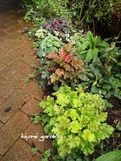 Discover the best plants for your very own backyard vegetable garden. Check out our article that shows you the easiest plants to get started. Backyard Vegetable Gardens, Outdoor Gardens, Green Garden, Shade Garden, Hardy Plants, Heuchera, Organic Plants, Gras, Cool Plants