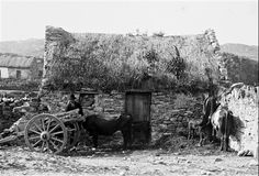 Photo: Illustrative image for the 'Images of Connemara page Ireland Uk, Images Of Ireland, Ireland Travel, Old Pictures, Old Photos, Vintage Photos, Farm Images, Scotland History, Irish Cottage