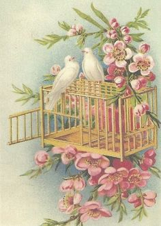 A Kindred Spirit: Photo - Doves Decoupage Vintage, Éphémères Vintage, Images Vintage, Vintage Ephemera, Vintage Pictures, Vintage Cards, Vintage Prints, Vintage Birthday Cards, Shabby