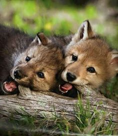 teething pups                                                                                                                                                      More