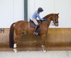 Het is één van de eerste dingen die je leert als je begint met paardrijden: halthouden. Omdat het zo'n simpele oefening lijkt, sta je er tijdens je training misschien niet vaak bij stil (!). Toch komt er bij een goede…