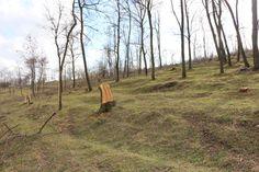 Foto pădure tăiată