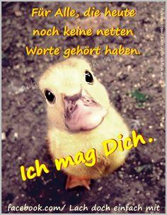 Ich_mag_Dich