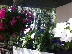 summer flowers in Finland