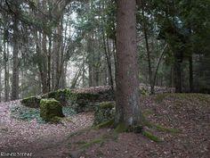 Die Ruine der Pirkenreuther Kapelle - Fränkische Schweiz.  Die Ruinen der Pirkenreuther Kapelle die dem heiligen Georg geweiht war war einst ein Wallfahrtsort zahlreiche Pilger besuchten den Ort am St.Georgstag Lorenztag Hedwigstag und am Liebfrauentag.  Das Dorf Pirkenreuth von dem heute nur noch vereinzelt Grundmauern zu finden sind wurde 1366 erstmals urkundlich erwähnt.  Am 9. Februar 1430 während der Hussitenkriege wurde das Dorf und die Kapelle zerstört. Es ist überliefert dass man…