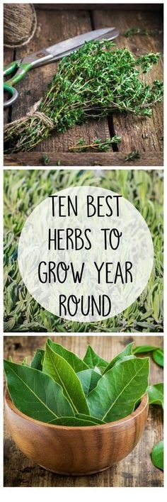 10 Best Herbs to Grow All Year Round - Crafty Little Gnome #indoorgardening #GardeningUrban
