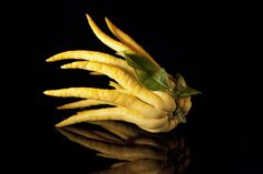 Buddha's hand: or cédrat sarcodactilis. Very popular with Italians who eat it with carpaccio marinated in coarse salt. Rodin, Tempura, Seafood Dishes, Food Art, Limes, Weird, Cook, Nature, Buddha
