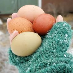 every hour or so until she lays her egg. As a Last Resort for an Egg Bound Hen If Clean Chicken, Best Chicken Coop, Types Of Snake, Massage Her, Duck House, Duck Eggs, Baby Chicks, Chicken Eggs, Small Birds