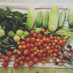 Today's harvest #homegrown #homesteading #garden #vegetables #localfood…