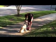 Dog Training for Tampa Bay|Sam Ivy K9 Consultants