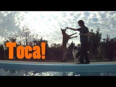 Como ensinar seu cachorro a tocar o focinho na sua mão (hand target) - A...