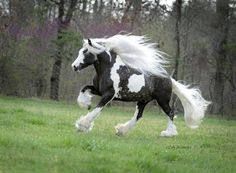 Chocolate Silver Dapple Pinto | World's Most Beautiful Horse