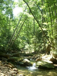 Part of the Devil's Bathtub trail, outside of Gate City, Virginia. It's a long, poorly marked trail, but worth it. There were 11 river crossings, you will get wet.