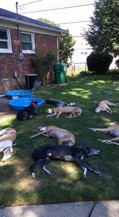 Greyhound retirement party. Party 'til you drop!