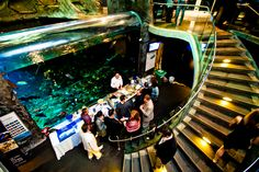 Explore these photos to experience what the Aquarium looks like dressed up for an event. Your guests will be enthralled by the beauty of our exhibits and galleries. Each of these spaces will provide your guests with a clear view of fascinating marine creatures.