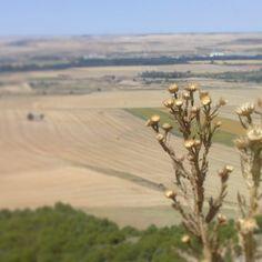 Campos de cereal bajo el páramo