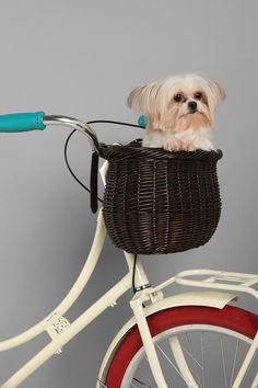 Bushel Bike Basket --does not include the obviously sedated dog. Bicycle Basket, Bike Baskets, Bicycle Bag, Biking With Dog, Bushel Baskets, Willow Wood, Yorkie, Urban Outfitters, Cute Animals