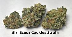 This article gives a detailed overview of Girl Scout Cookies Marijuana Strain. Weed Shop, Buy Weed, Weed Drug, Weed Buds, Cannabis Seeds For Sale, Weed Recipes, Herbs